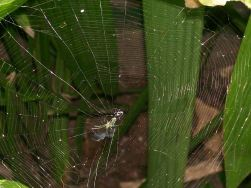 Spider Web In The Jungle...
