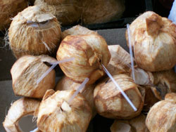 Coconuts, Panama Border
