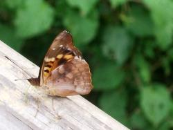Butterfly Following Us
