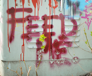 Feed Me, Ottawa Graffiti, Spring 2011
