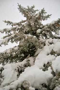 First Winter Storm in Ottawa