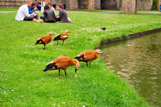 Birds and Tourists