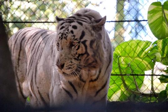 Merida's Zoo