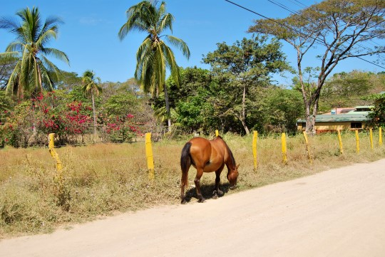 Just a Horse on the Road...