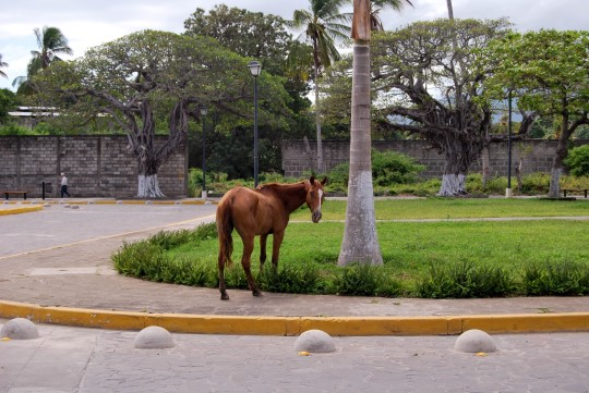 Just a Horse in the Street...