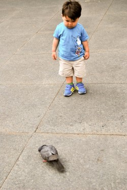 Chasing After Pigeons