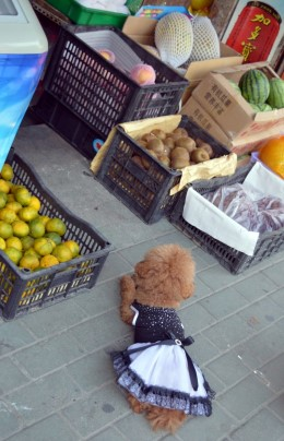 Cute Dog in Wuhan
