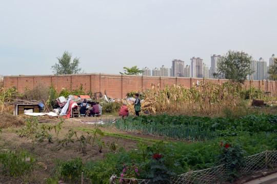Rural and Urban China