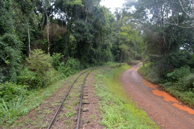 Train Through the Jungle