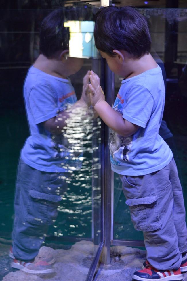 Le Croisic Aquarium