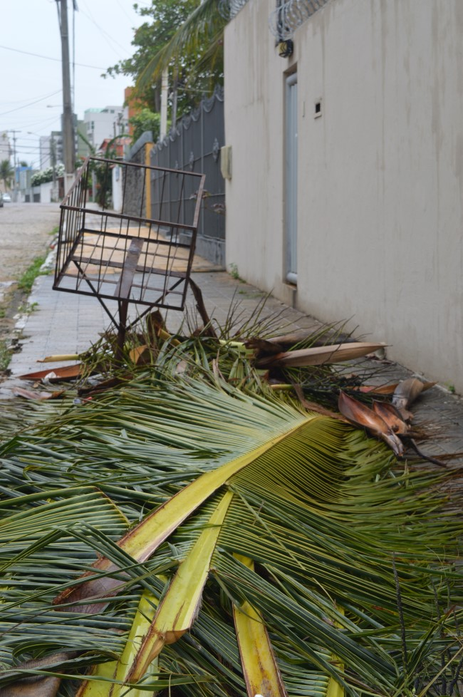 Palm tree branches in the streets of Ponta Negra