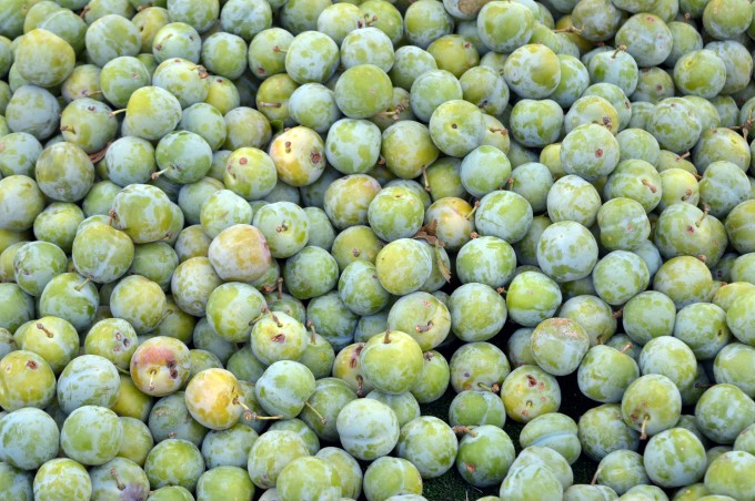 Mirabelle plums at Tharon's Market