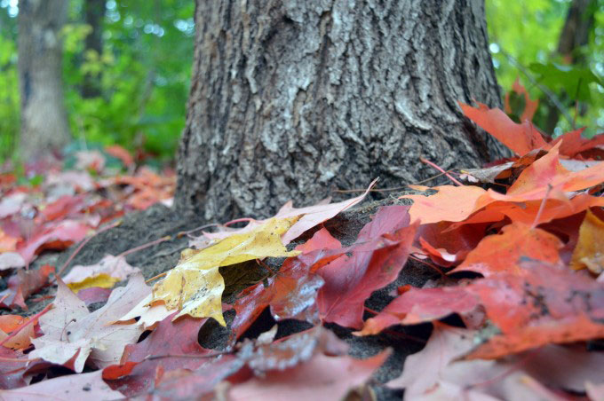 Leaves and tree trunk