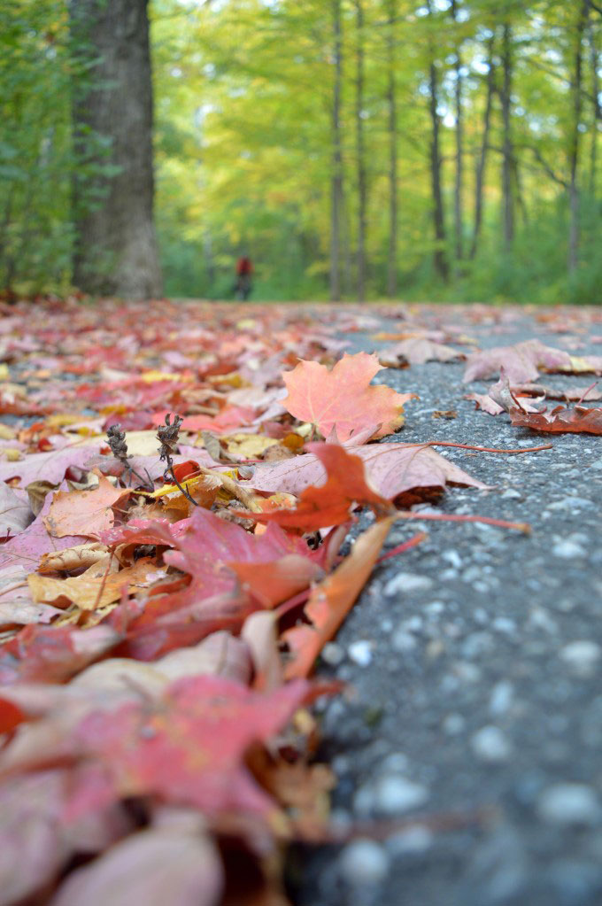 Fall leaves along the path