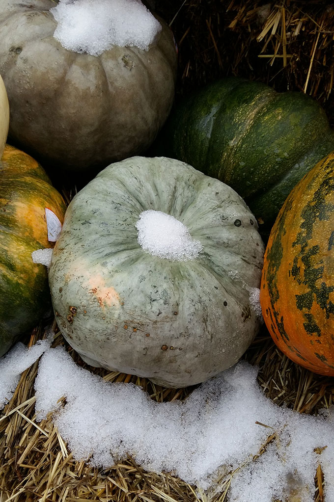 Snow on squashes left outside at the supermarket