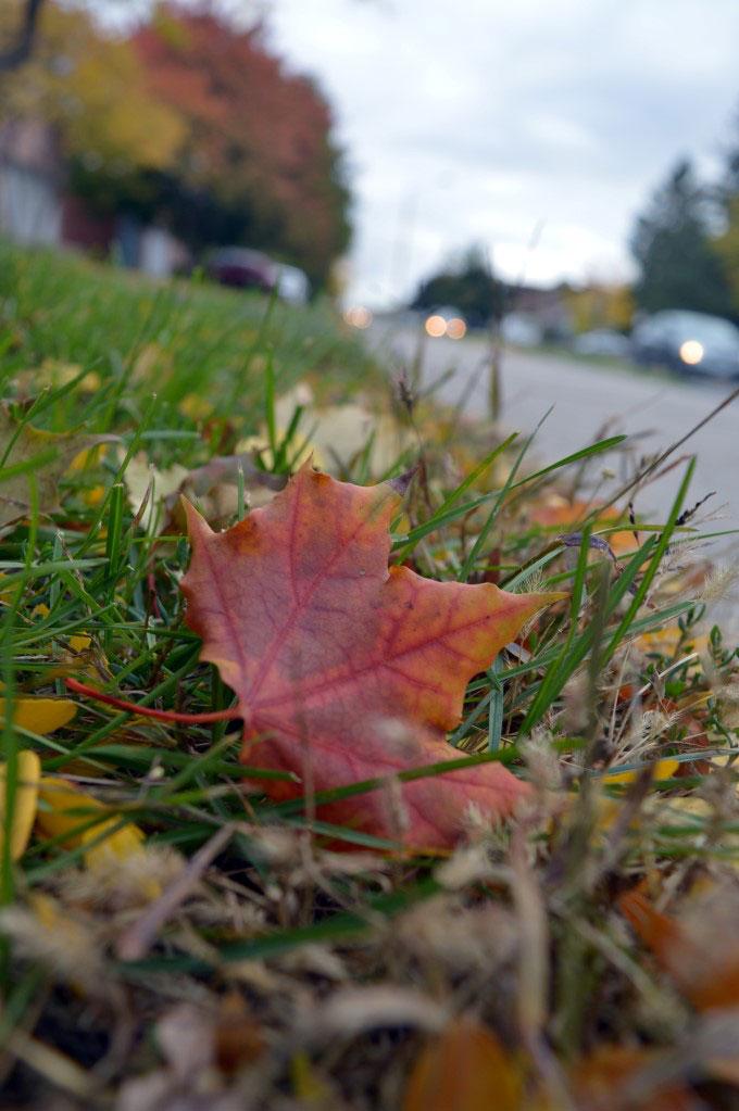 Leaf stuck in green grass