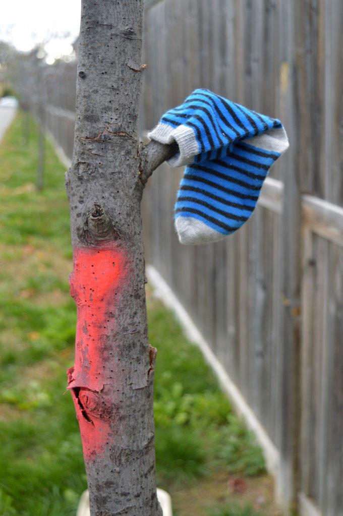 Apparently, trees need socks to handle the season