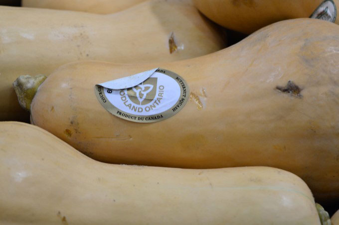 Seasonal butternut squashes at the supermarket