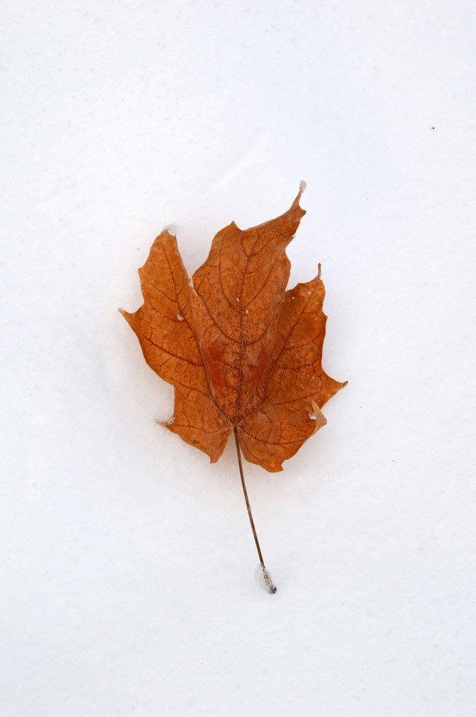 The leaf fall left behind