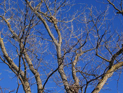 Blue Sky and Bare Trees