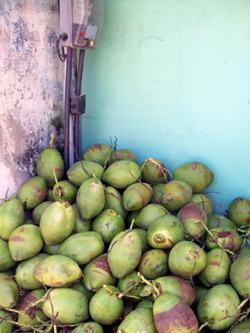 Yummy Coconuts