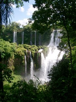 Falls In The Jungle