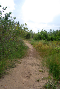 Little Path to the Dunes