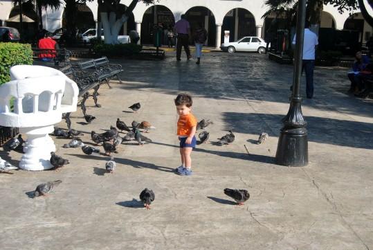 Mark Chasing Pigeons in Merida