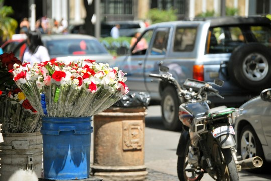 Flowers in the Traffic