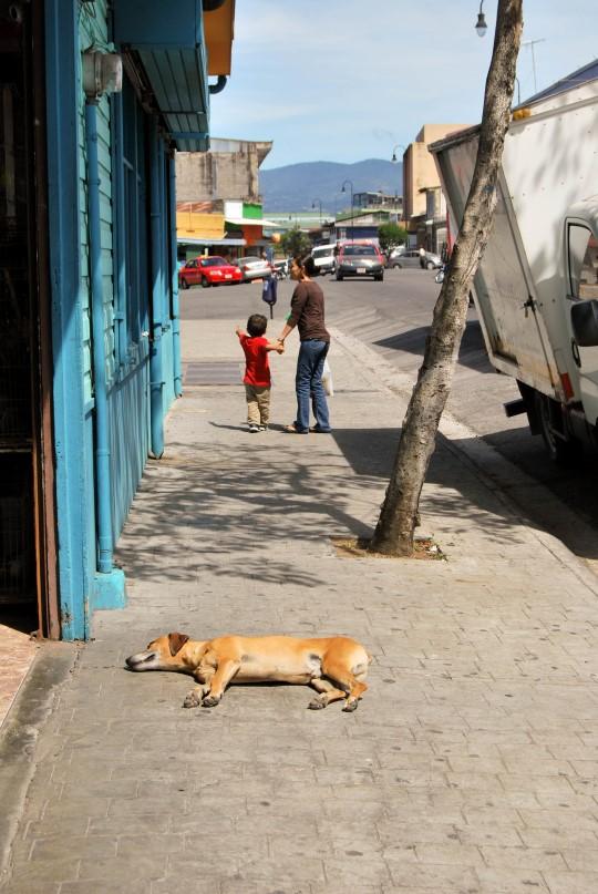 Calle 14