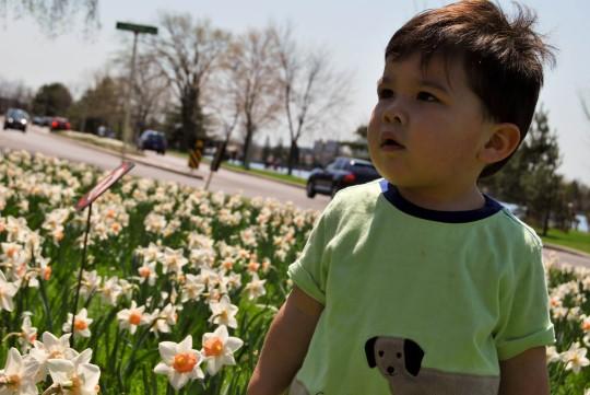 Tulips Festival Starting
