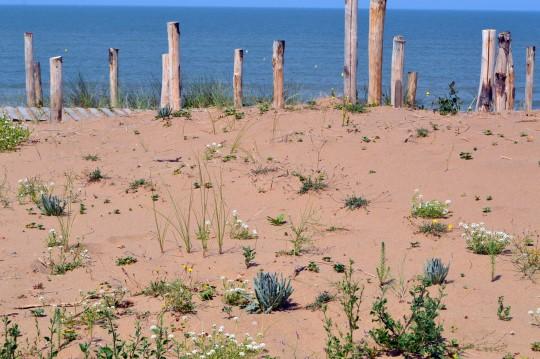 Tharon's Beach
