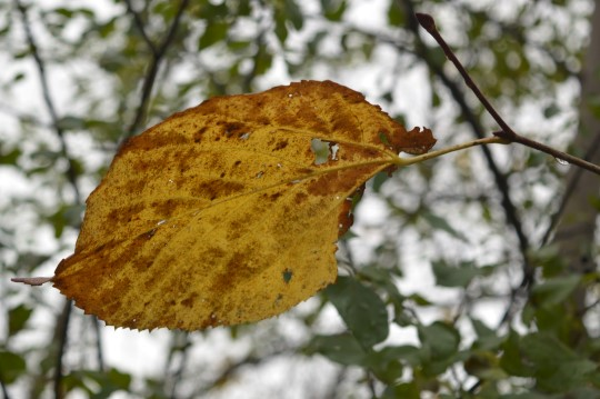 Fall in Ottawa