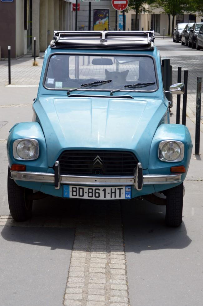 Big Dog, Small Car