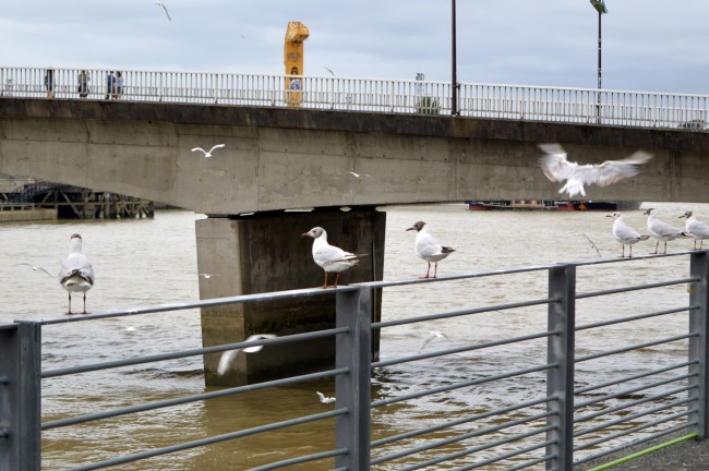 Seagulls by the Loire River