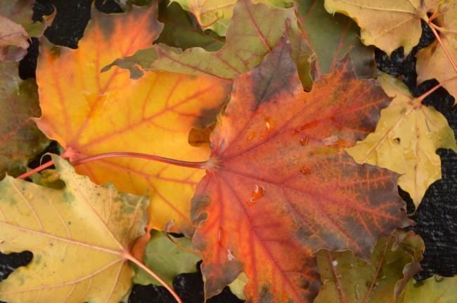 Fall Colours in Ottawa