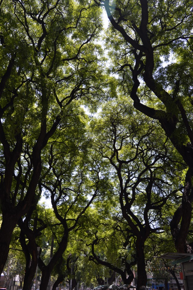 Trees and large avenues