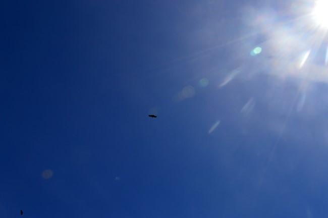 Blue sky, a few birds...