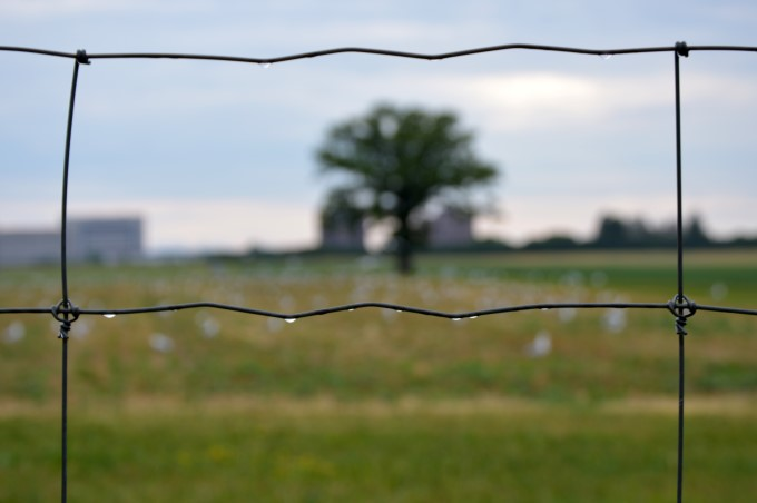 A lone tree stands at the Experimental Farm, Ottawa, July 2016