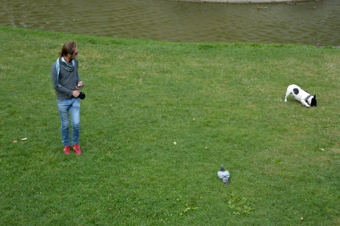 A guy, a dog and a pigeon
