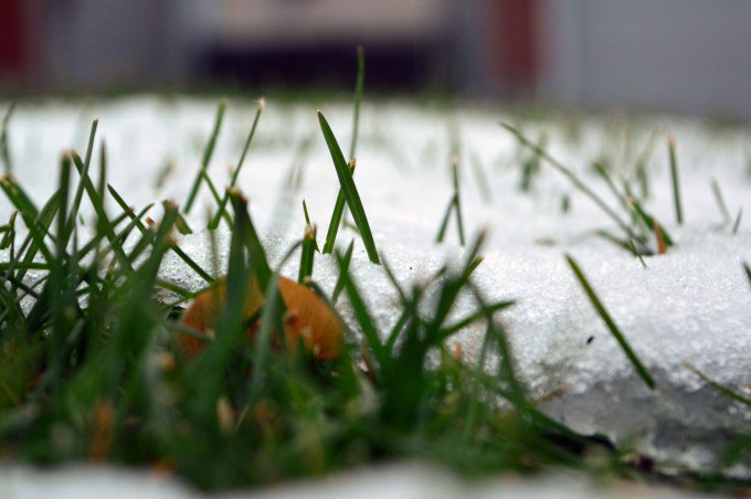 Grass, leaves, snow
