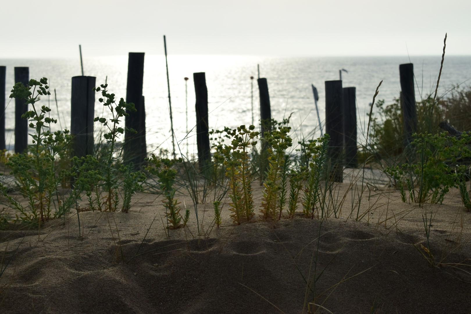 Along the beach walkway in Saint-Michel