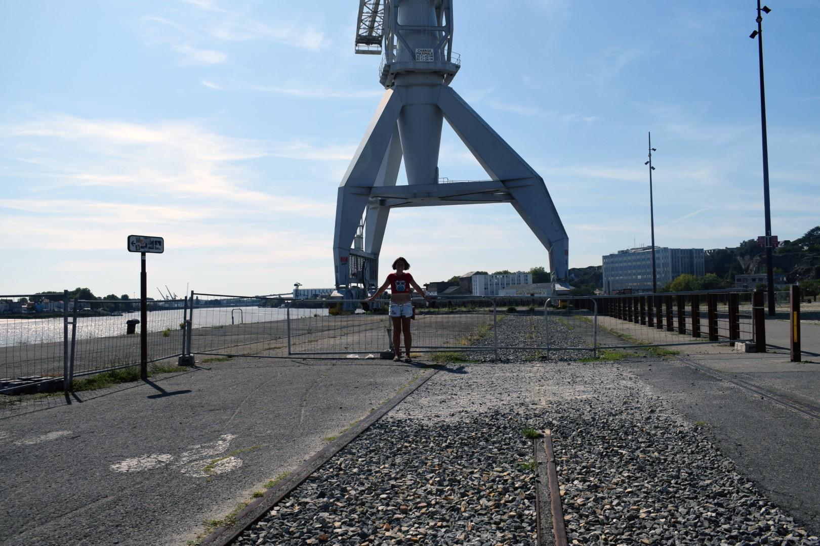 Grey crane, Île de Nantes