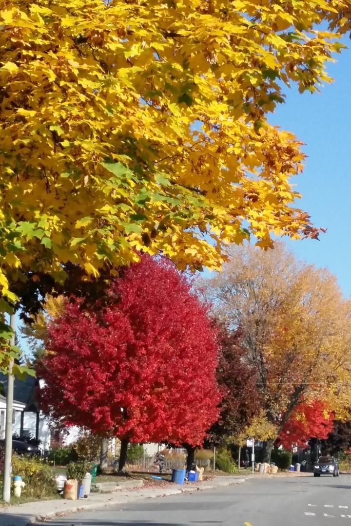 Crerar Avenue, Ottawa