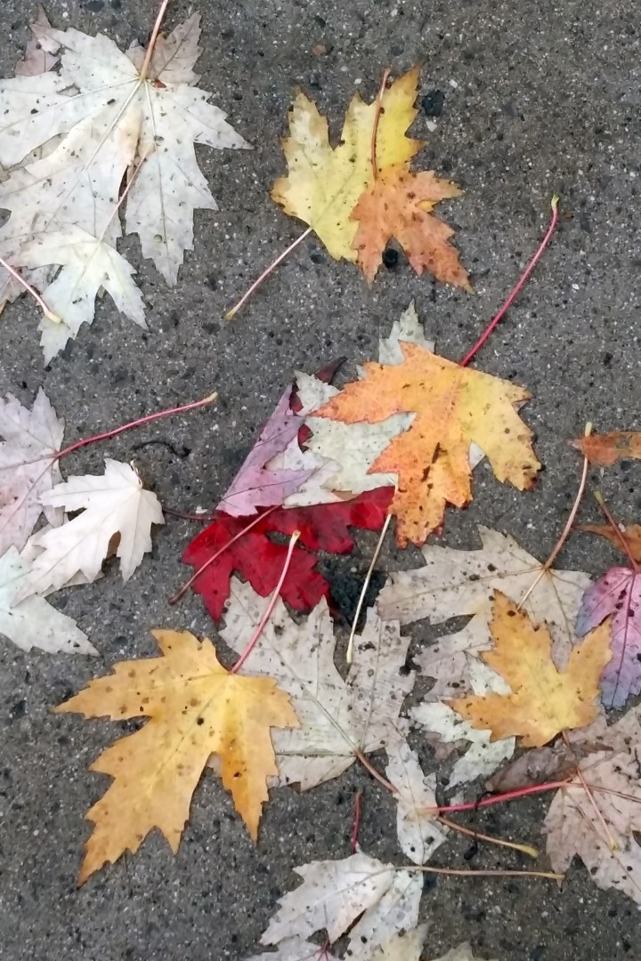 Rainy fall day in Ottawa