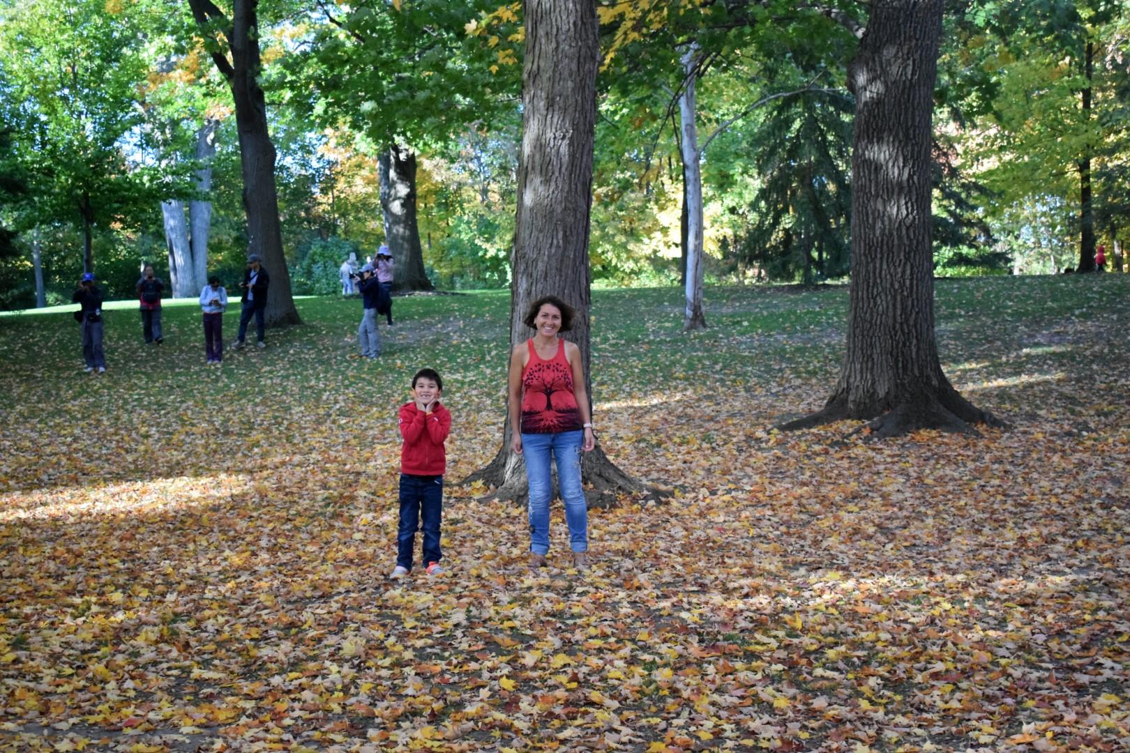 2019 fall colours at Rideau Hall, Ottawa