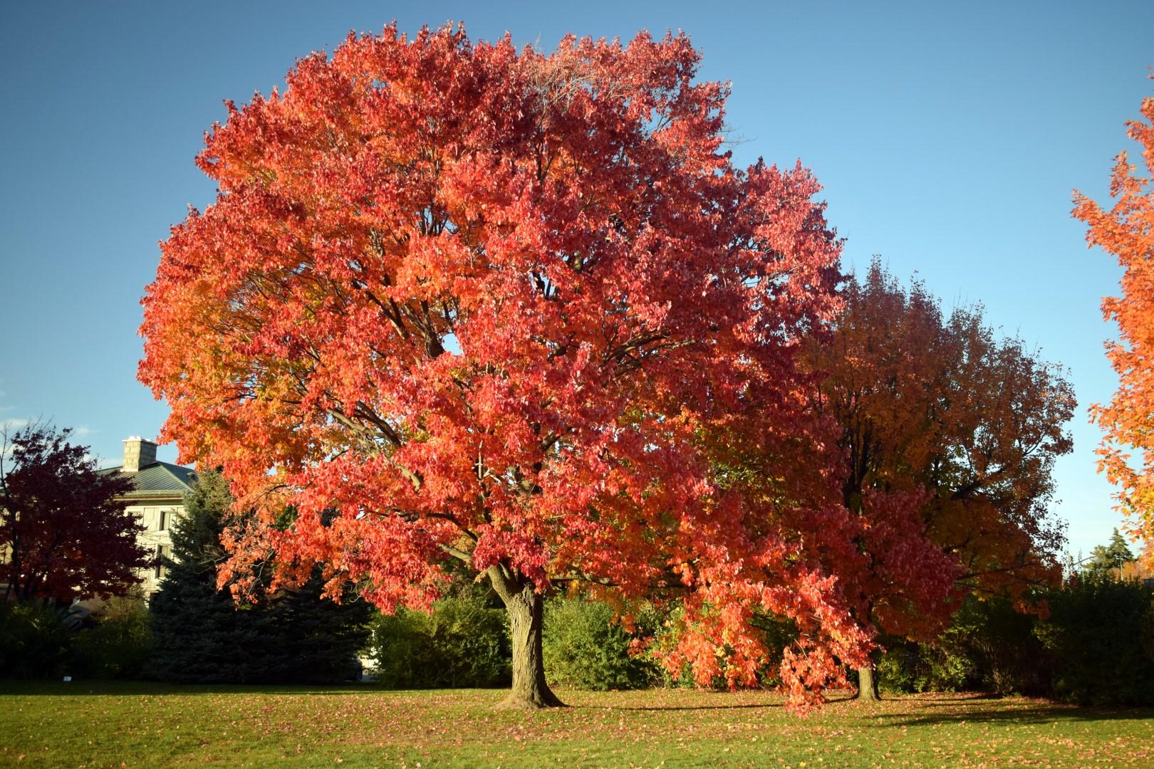 Rideau Falls Park, Ottawa