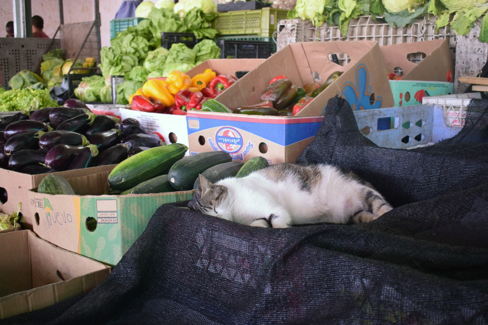 Vega Central de Santiago, the market home to dozens of cats and dogs