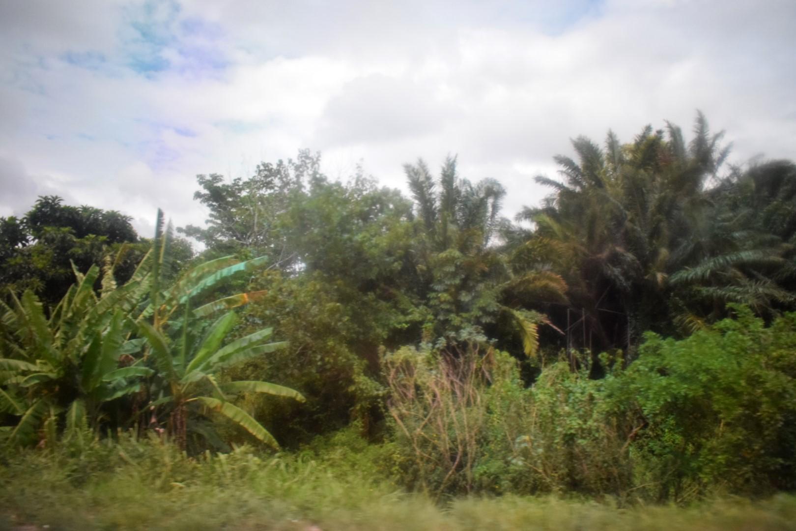 Recife to Maceió