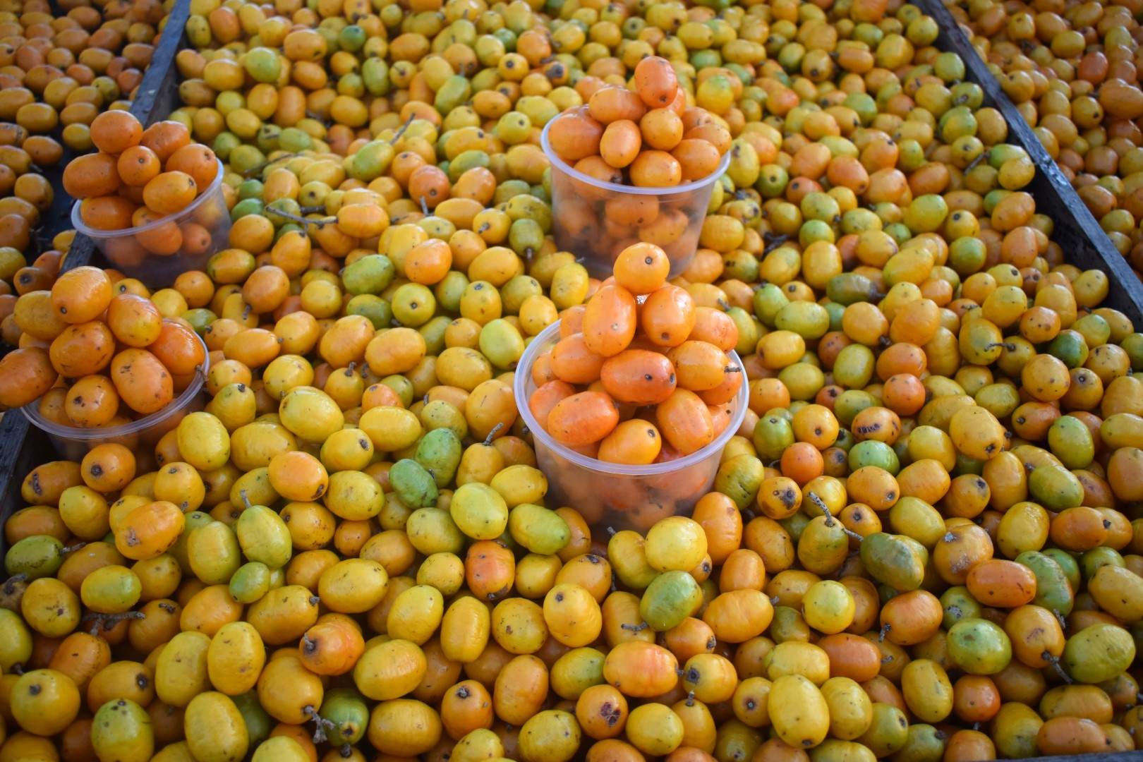 Ciruelas (plums), Maceió